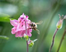 3 Flower. Color Toned Image. Focus
