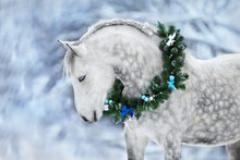 White Horse With Christmas Wreath Isolated On Black Background