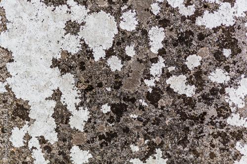 Valokuva Moos und Flechten auf Stein als Textur und Hintergrund