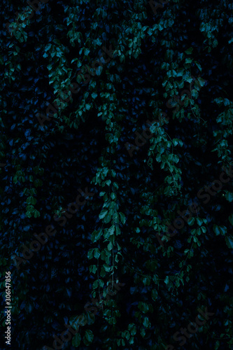Tropical leaves for background, Green leaves of tropical forest plant for nature pattern and background. - 306147856