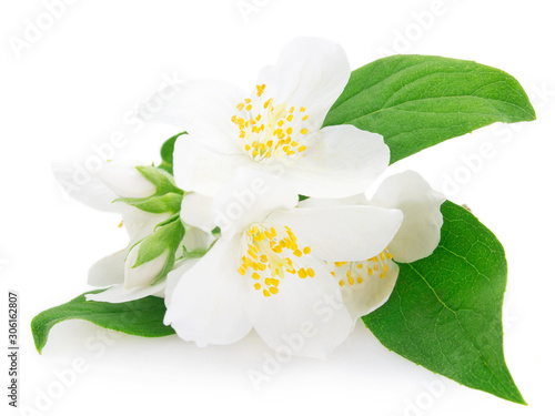 Fresh jasmine on white background Poster Mural XXL
