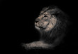 lunar beast (ashen).Calm and confident profile view. powerful male lion with a chic mane impressively lies.