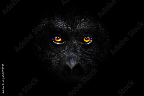 orange luminous eyes on the black face of a monkey in a black night, a frightening look that embodies fears and phobias Canvas Print
