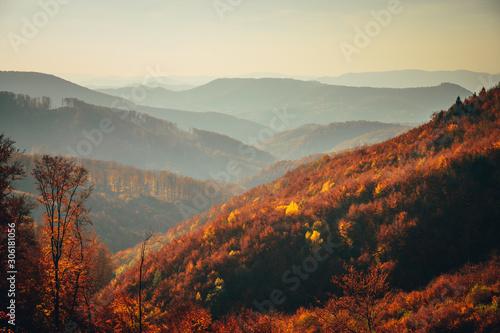 Poster Marron chocolat Colorful Autumn Carpathian mountains. Natural wallpaper or background