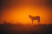 Alone Horse Grassing On Autumn Morning Meadow