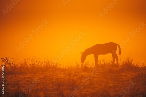 Spoed Fotobehang Oranje eclat Horse silhouette on morning meadow. Orange photo, edit space