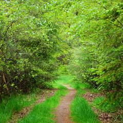 Fototapeta Do hotelu Walkway in a spring forest in the Netherlands