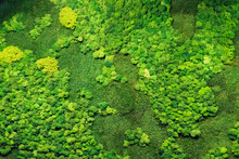 Green Moss For Decor In The Office On The Wall