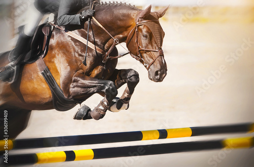 Fotomural A Bay racehorse with a rider in the saddle quickly jumps over the high yellow-black barrier at a show jumping competition on a Sunny summer day