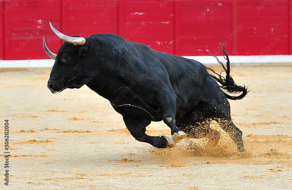 Fototapeta toro negro