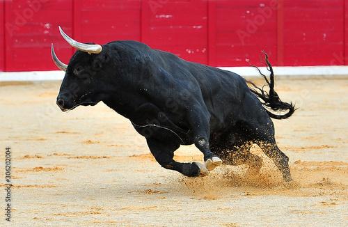 Obraz na plátne toro negro