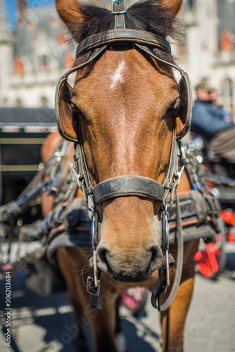 Photo Horse in the market square with blinders blinkers on tourism in Belgium bruges e
