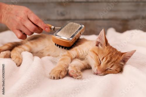 Fotografía Young ginger kitten enjoy fur brushing