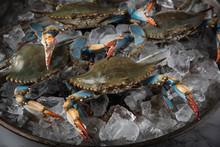 Chesapeake Blue Crab On Ice