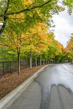 Roadside Autumn Trees 6