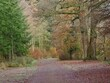 canvas print picture Woodland Road