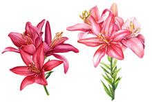 Beautiful Lilies, Large Bouque...