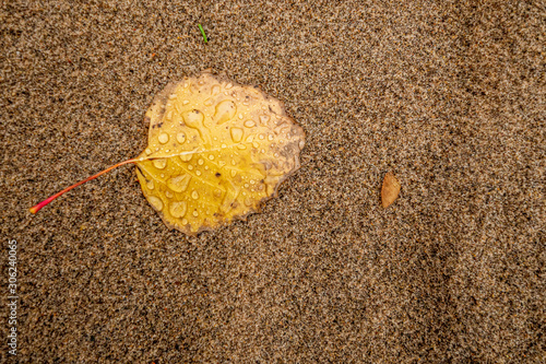 Yellow leaf on sandy beach texture background