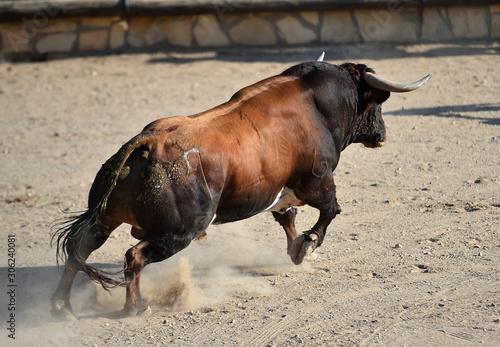 Fototapeta toro en españa obraz