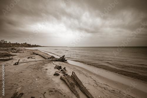 Valokuva Drift wood on sandy beach shore