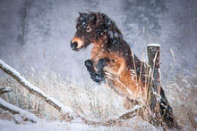 Portrait Of A Pony In Winter Forest.