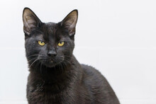 Black Angry Face Cat