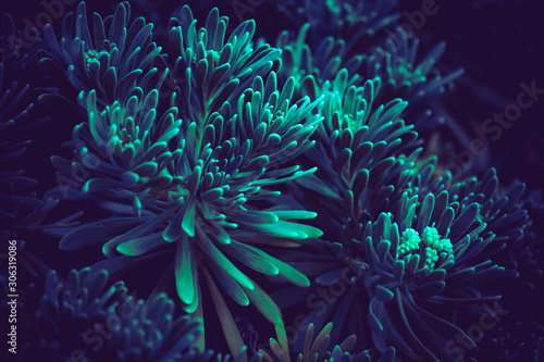 Photo deep blue bloom plants