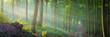 canvas print picture - Die Sonne scheint durch Nebel in den Wald - Buchenwald Panorama