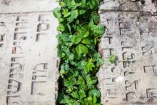 Gravestones In The Old Jewish ...