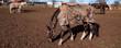 Panorama Pferd mit Pferdedecke gegen die Kälte