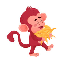 Funny Little Red Monkey Going ...