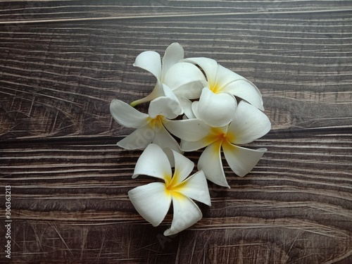 Foto op Plexiglas Magnolia Frangipani flowers (Plumeria flowers) blooming on wallpaper background closeup. White beautiful flowers with yellow at center.