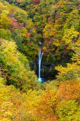 Panel Szklany Drzewa Komadome Falls
