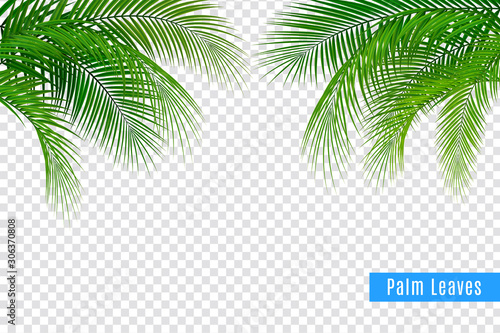 Obraz Realistic Tropical Leaves Frame - fototapety do salonu