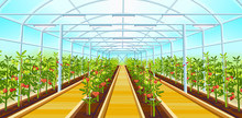 A Large Greenhouse With Rows O...