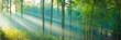 canvas print picture - Sonnenstrahlen im Wald - Buchenwald Panorama