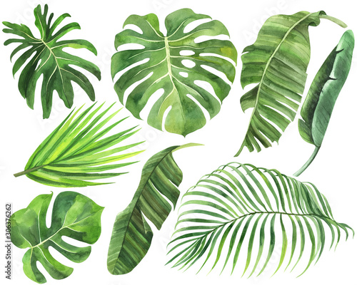 Set of palm, monstera, banana leaves of tropical forests on an isolated white background, watercolor stock illustration,  jungle drawing Canvas Print