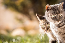 Two Lovely Cats Loving Stock Photo