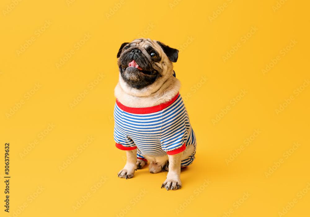 Fototapeta Cute pug dog in t-shirt on color background
