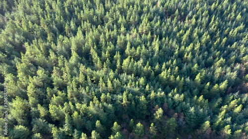 Foto auf Leinwand Olivgrun High drone view of a green pine forest