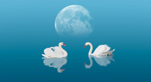 """A Pair Of Swans With Reflection On The Water Under Full Moon """"Elements Of This Image Furnished By NASA"""""""