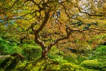 Colorful Foliage On The Japane...
