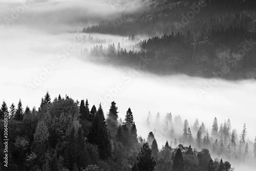 Foto auf AluDibond Morgen mit Nebel wonderful black - white mountains image, trees in morning fog, beautiful autumn scene, monochromatic amazing nature background, Carpathians, Ukraine, Europe landscape