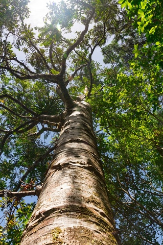 trunk of a tree Fototapeta
