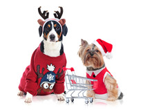Dogs Wearing Christmas Outfit With A Shopping Trolley