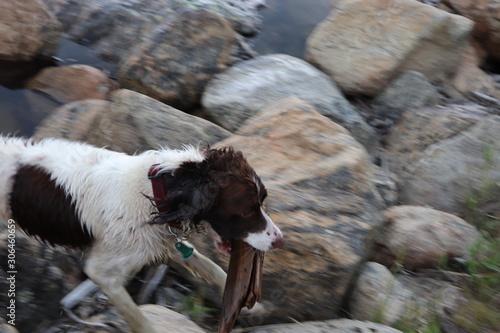 Fotografie, Tablou  Having Fun around a Mountaintop Reservoir