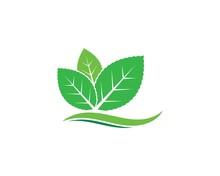 Mint Leaf Illustration Vector ...