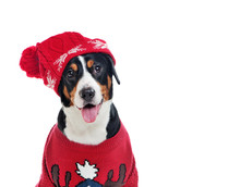 Close-up Portrait Of A Dog In Red Knitted Hat And Pullover