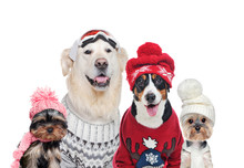 A Group Of Dogs Wearing Winter...