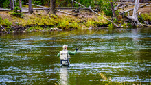 Fly Fishing In The Madison Riv...